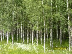 A Summerday in Dalarna, Sweden