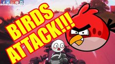 When Birds ATTACK! Bird Attack, Angry Birds, Motorcycle, Memes, Meme, Biking, Jokes, Motorcycles, Motorbikes