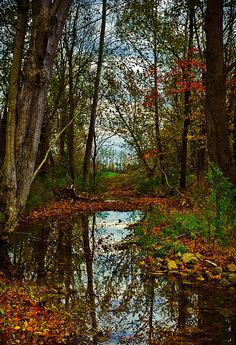 """""""Colors of Fall"""" Indiana Nature Photographer, Kristi Swift, captures the woods just north of lovely Nashville, Indiana."""