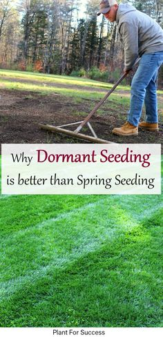 Seeding your lawn when your grass is dormant is a great way to Repair or Rennovate your Lawn. Research has shown that Dormant Seeding outperforms spring seeding when sticking to a good lawn care and fertilizing program. #landscape #seedinglawn #seedinggrass