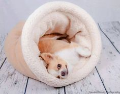Cave Dog Bed burrow bed many colors for Chihuahua Dachshund and Chinese crested dogs snuggle sack Pet Pizzaz (56.95 USD) by PetPizzazShop