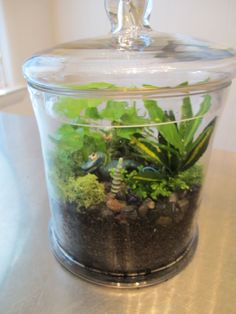 How to Plant a Terrarium. Click to read the whole blog post!