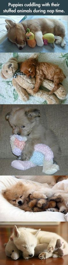 Sleeping And Cuddling with toys...@Amber Marie  I bet you wanna cuddle every one :D cute puppies. Puppies cuddling with their stuffed animals during nap time.