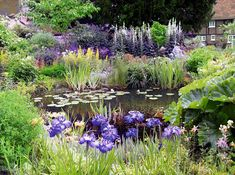 Don shows how to create a wildlife pond Monty claims creating the right environment will naturally cause animals to come. He sugge. Garden Pond Design, Bog Garden, Dream Garden, Garden Pots, Landscape Design, Big Leaf Plants, Bog Plants, Water Plants, Backyard Water Feature