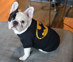@Manny P P The Frenchie  is ready to spring into action w/ his @D C Comics Batman tee! #superpet