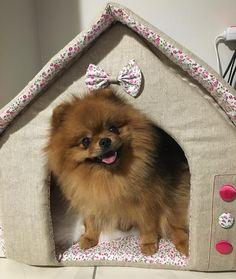"575 Likes, 7 Comments - Boubou&BelissFashion Dog (@boubou_beliss_sweetpoms) on Instagram: ""#instapom #petlovers #dogfashion #petlovers #pomstagram #pomeranianworld #pomeranian…"""