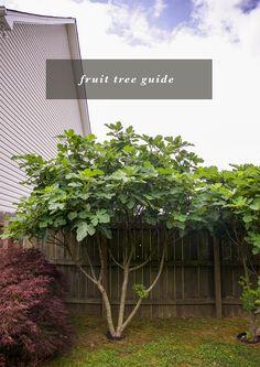 Backyard fruit trees + fruit bushes guide. | In Honor Of Design