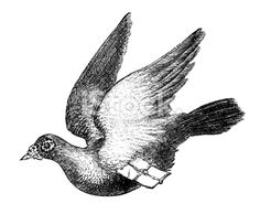 This carrier pigeon is flying home to you with a message. What does the message say?