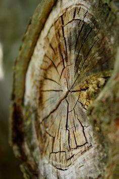 Wood Texture   ArtPropelled