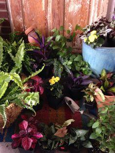 Let the pot gardens begin