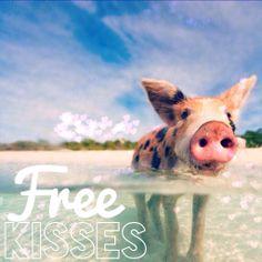 Happy Valentine's Day! Free Kisses in the Exumas, Bahamas! Bahamas Vacation, Nassau Bahamas, Swimming Pigs, Scuba Diving, Happy Valentines Day, Adventure Travel, Arizona, Around The Worlds, Island