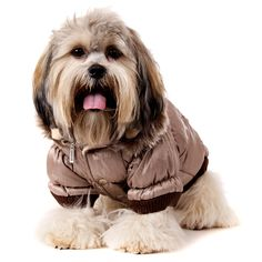 "UrbanPup Luxury Quilted Parka with Detachable Hood (Small - Dog Body Length: 10"" / 25cm): Amazon.co.uk: Pet Supplies"