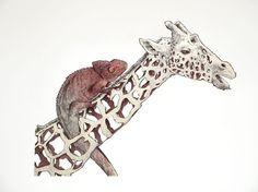 Illustrations by Jaume Montserrat
