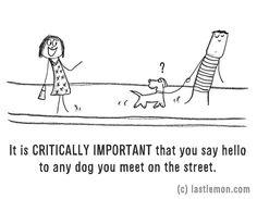 Minden kutyát vidáman köszöntesz az utcán?