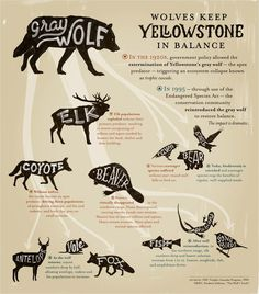 This pin correlates with how wolves are integral parts of ecosystems, especially in Yellowstone. The biodiversity in Yellowstone is enriched because of the wolf populations. Without wolves, other species suffer. Science Classroom, Science Education, Forensic Science, Classroom Ideas, Higher Education, Citizen Science, Science Lessons, Life Science, Science Fair
