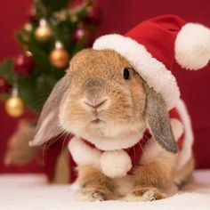 310 best santas critters images in 2018 christmas. Black Bedroom Furniture Sets. Home Design Ideas