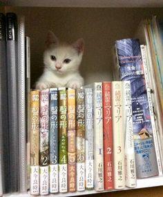iPetGroup愛寵物 - 剛收養的貓咪超可愛,3個月後竟變成...讓主人超級崩潰!!