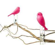 Sparrow Clothespins Pink now featured on Fab.