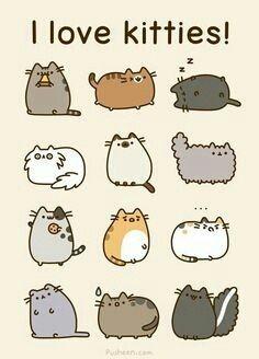 Kitty Lover!