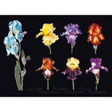 Iris Assortment Black Collection