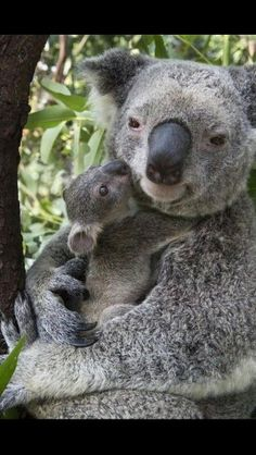 Cuddles for mother...