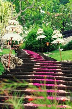 Jimbaran Garden, Bali #bali #retreat #indonesia. At www.chocolatebuddha.co.uk we adore this bodacious colour and love to use it in our yoga and pilates clothing. Great for opening the heart chakra too!