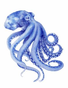 Blue Octopus Watercolor Painting Archival Art Print Hamptons Style Decor Beach Art