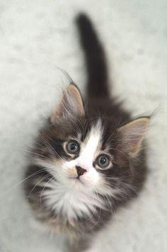 You're a pretty kitty