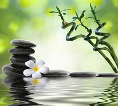 The wonderful healing properties of Reiki know no boundaries. Reiki    energies can be sent to anyone or anything anywhere across the world.     With Reiki Distance Healing you can receive the benefits of Reiki   without stopping what you are doing or having to go anywhere.  An email will be sent to you once the Reiki Treatment has been completed.