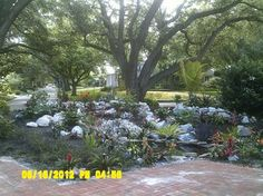 Tropical, low maintenance front yard - traditional - landscape - orlando - Laurence E Fosgate