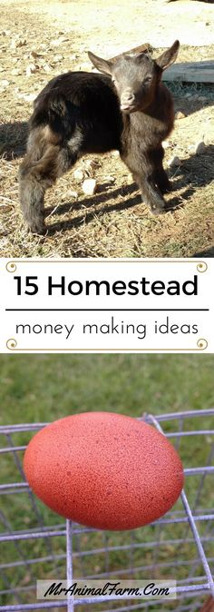 "15 ways to make money homesteading.  Whether you are looking for a little pocket change or to replace your ""regular"" job these homestead money making ideas will get you started."