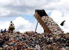 O relatório indica que a contínua Degradação Ambiental já causou a perda de mais de 80% da biodiversidade mundial.