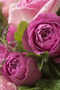 Roses roses - Bouquet Summer Collection Créateur de juillet/août 2014 par Nicolas Rosière, membre du Collège d'Art Floral et fleuriste chez Gil Boyard Interflora France © Matthieu Langrand
