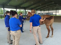 More neuro tests at UF. The #bhfer #helpahorse