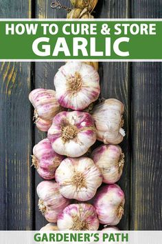 Garlic is a kitchen must-have. And you can enjoy the rich flavor of your own harvest year-round with one, or all, of our storage methods. Use a traditional braid to hang bulbs from the rafters, or try them dehydrated, frozen, or pickled. Learn how to cure and store homegrown garlic now. #garlic #garden #gardenerspath Veg Garden, Vegetable Gardening, Organic Gardening, How To Store Garlic, Harvesting Garlic, Gardening Tips, Container Gardening, Canning Jar Labels, Canning Recipes