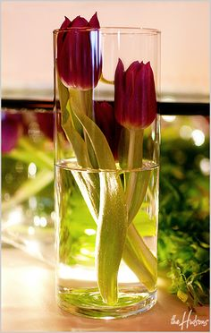 Tulips submerged in vases - Photo by Jason