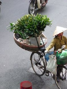 Flowers for the market . Vietnam