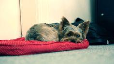Cinemagraph: distrusting dog / misstrauischer Hund.