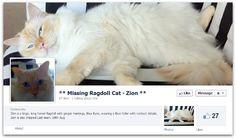 Facebook Ad Reunites Man With His Cat Social Media Marketing Agency, Digital Media Marketing, Digital News, Pet Home, Losing A Pet, Four Legged, The Dreamers, Best Friends, Ads