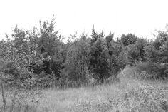 In the Park. At Twilight: Ephemeropterae˜ Twilight, Friday, Mountains, Park, Nature, Travel, Outdoor, Outdoors, Naturaleza