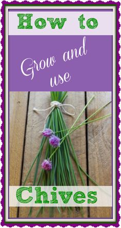 DIY gardening and cooking. Plant your garden and see how satisfying it is to pick and use herbs in food How-to-Grow-and-Use-Chives-