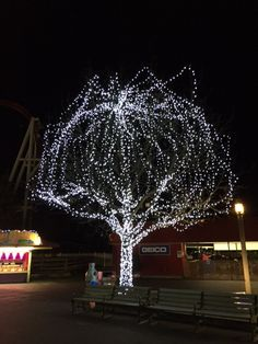 a tree of memories inside christmas candylane read on to find out why this tree - Hershey Christmas Lights