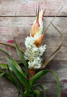 Growing and arranging beautiful Australian Native Flowers and all things Proteaceae. Australian Flora, Plants, Plant Images, Australian Native Plants, Native Plants, Native Garden, Flowers, Native Plant Gardening, Australian Native Flowers