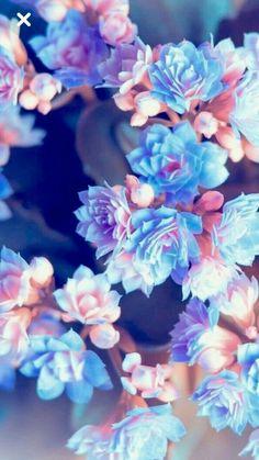 Summer Blossoms # Blossoms Summer blossoms S … Great pretty wallpapers Flower Iphone Wallpaper, Cute Wallpaper Backgrounds, Cellphone Wallpaper, Pretty Wallpapers, Flower Backgrounds, Colorful Wallpaper, Aesthetic Iphone Wallpaper, Galaxy Wallpaper, Nature Wallpaper