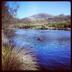 Silvermine Dam, Cape Town. Dog swimming heaven! by AfricanTours, via Flickr Hiking Dogs, Dog Walking, Cape Town, Walks, South Africa, Heaven, African, Swimming, Tours