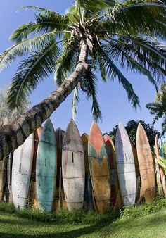 Spring just arrived, and we're already thinking about summer. Love the sun-faded colors on these surfboards.
