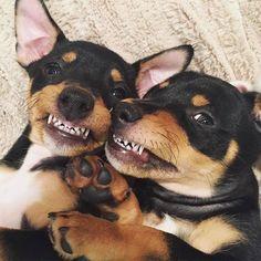 ¿Está realmente más limpia la boca de los perros que la nuestra?