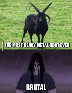 I want it! The most heavy metal goat ever!