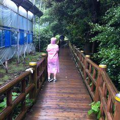 Eongtto(엉또) waterfall - water falls down when it rains