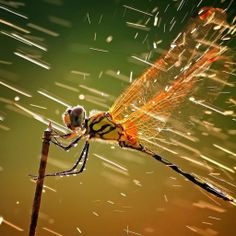 Dragonfly In Rain #iPad #Wallpaper HD